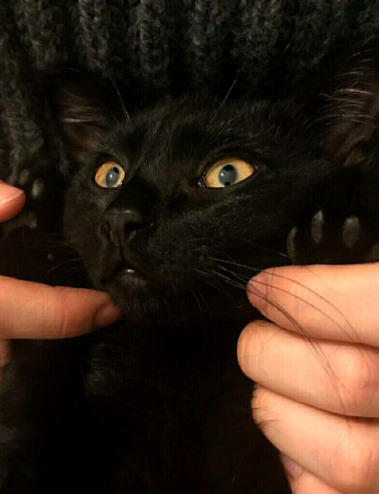 Circe 😻 Portrait Human Eye Animal Themes Mycat♥ BLackCat Circe Ya Tiene Casa CircetiAmo😻 Mycatisthebest MyCatismyLove Gatita  Love ♥