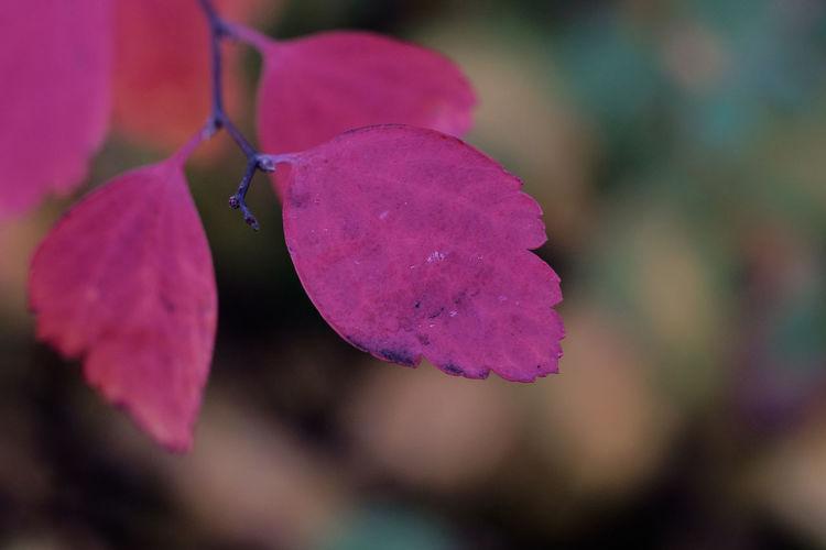 Maximum Closeness Tenebrio.photos Zeiss60mm Nature Showcase: November