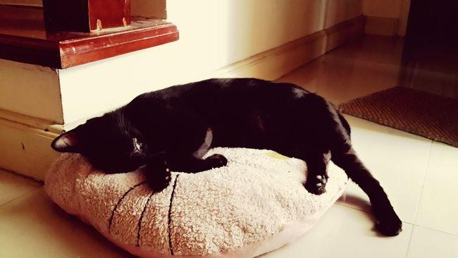 Love Cat Enjoying Life Sleeping Cat