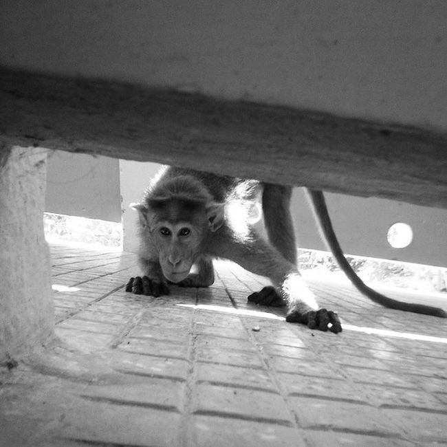 """Eye for an eye makes the world blind""-Gandhi @general ward,2013. OPD Ward Patientcare Jipmer Pondicherry Medical Medicine Lungs Animals Peta Monkeys Happiness Life Nexus Follow4follow Followme"