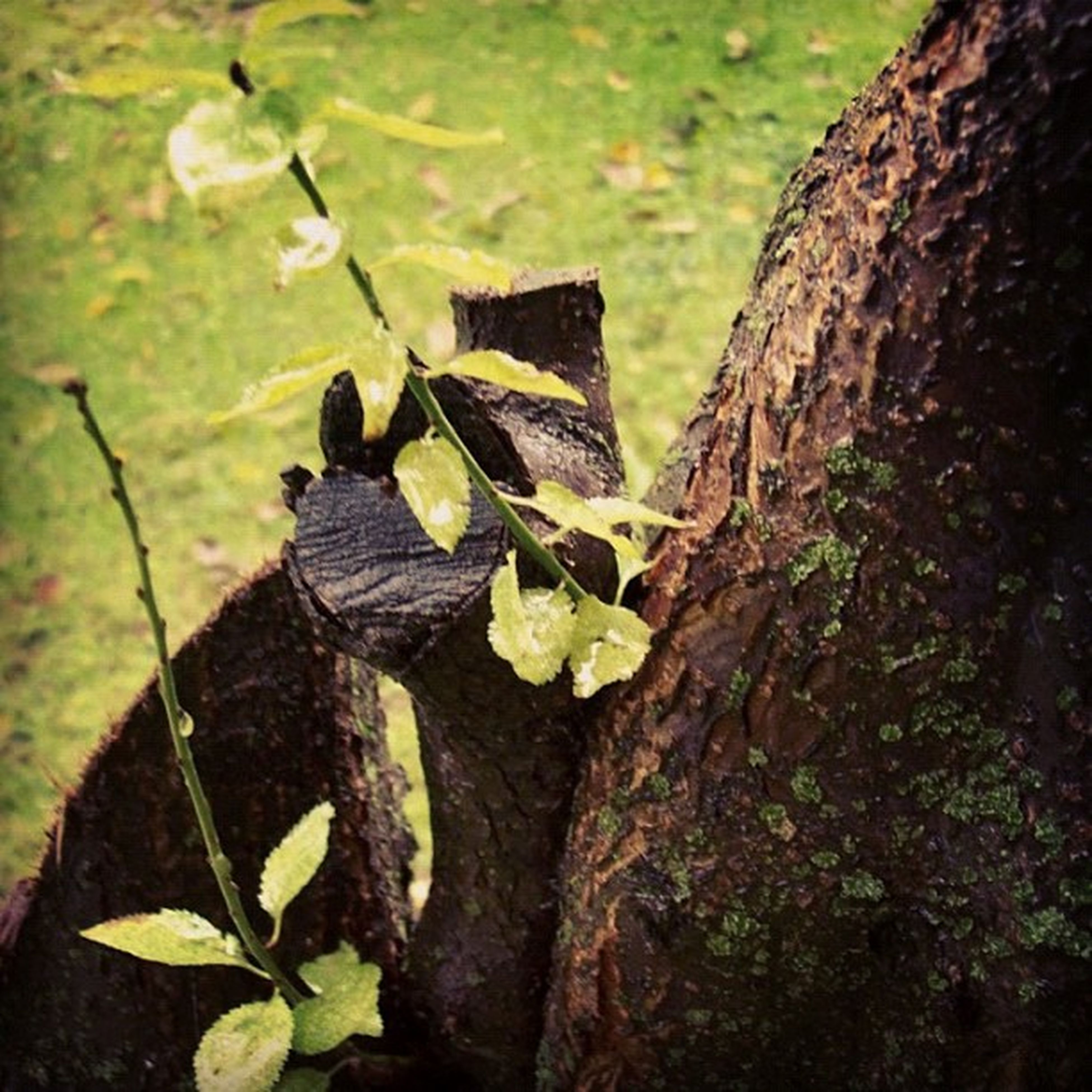 leaf, tree trunk, focus on foreground, close-up, wood - material, nature, tree, growth, forest, plant, textured, outdoors, day, tree stump, wildlife, no people, moss, natural pattern, beauty in nature, branch