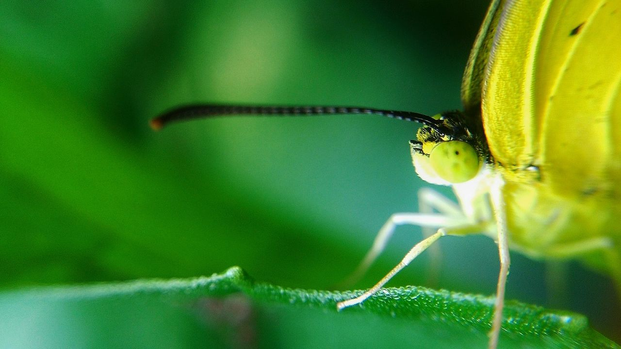 one animal, insect, animal themes, animals in the wild, animal wildlife, green color, close-up, focus on foreground, leaf, no people, day, nature, outdoors, plant, damselfly
