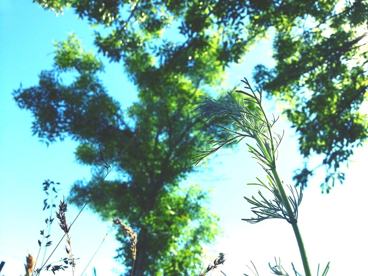 tree, low angle view, nature, growth, day, no people, beauty in nature, sky, outdoors, branch
