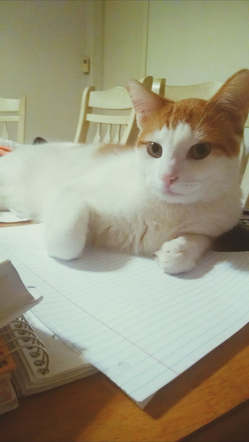 Cat Cat♡ Homework Buddy  My Distraction From Studying Lol