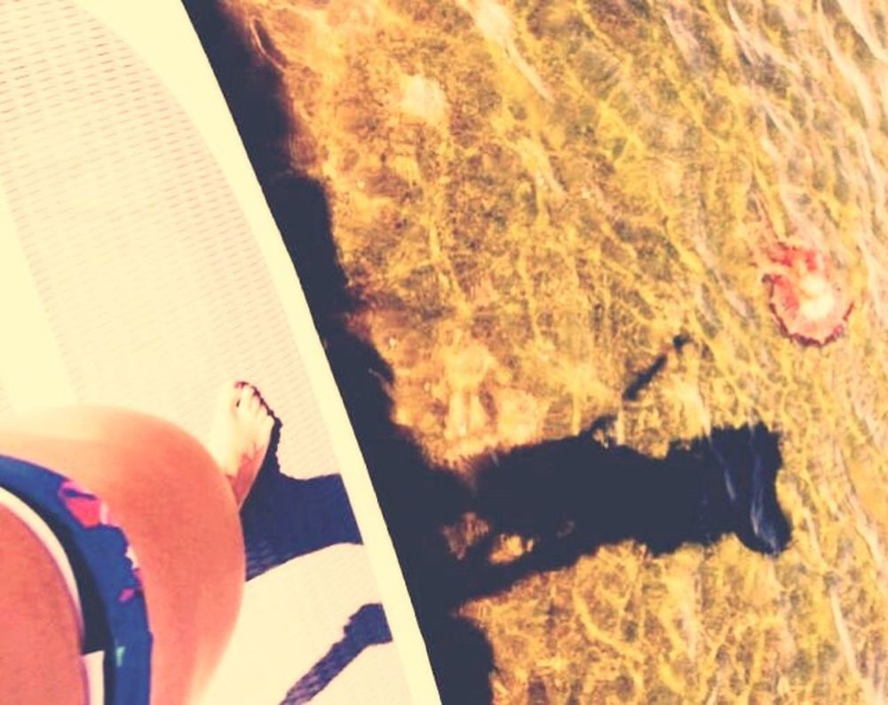Paddleboarding Salt Life Why I Love Florida Florida