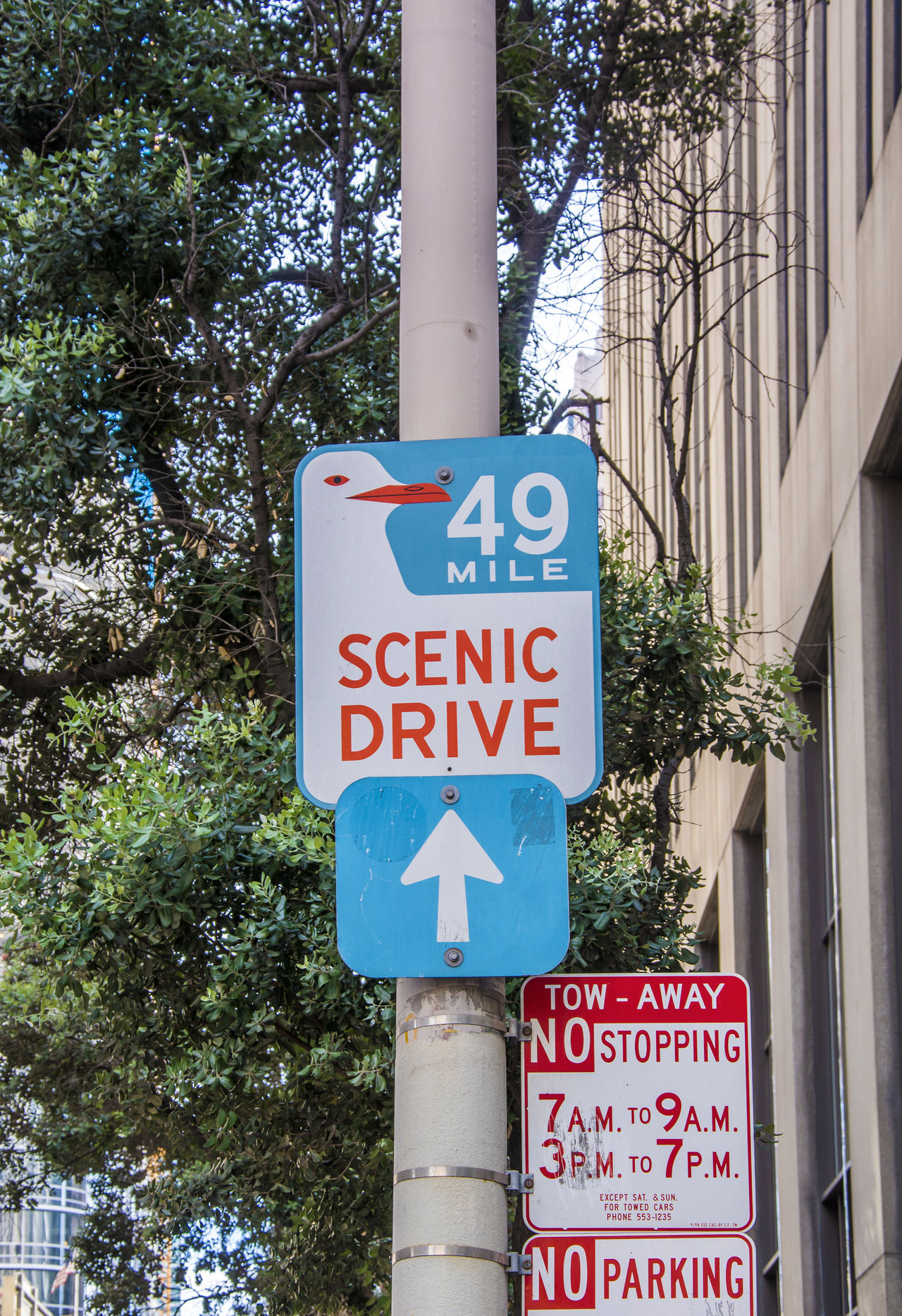 Scenic Drive sign in San Francisco Architecture Built Structure Close-up Communication Day Icon Information Low Angle View No People Outdoors Road Sign San Francisco Scenic Drive Text Tree Western Script