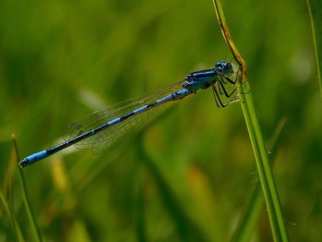 Dragonfly Green Green Green!  In The Fields The Week On Eyem