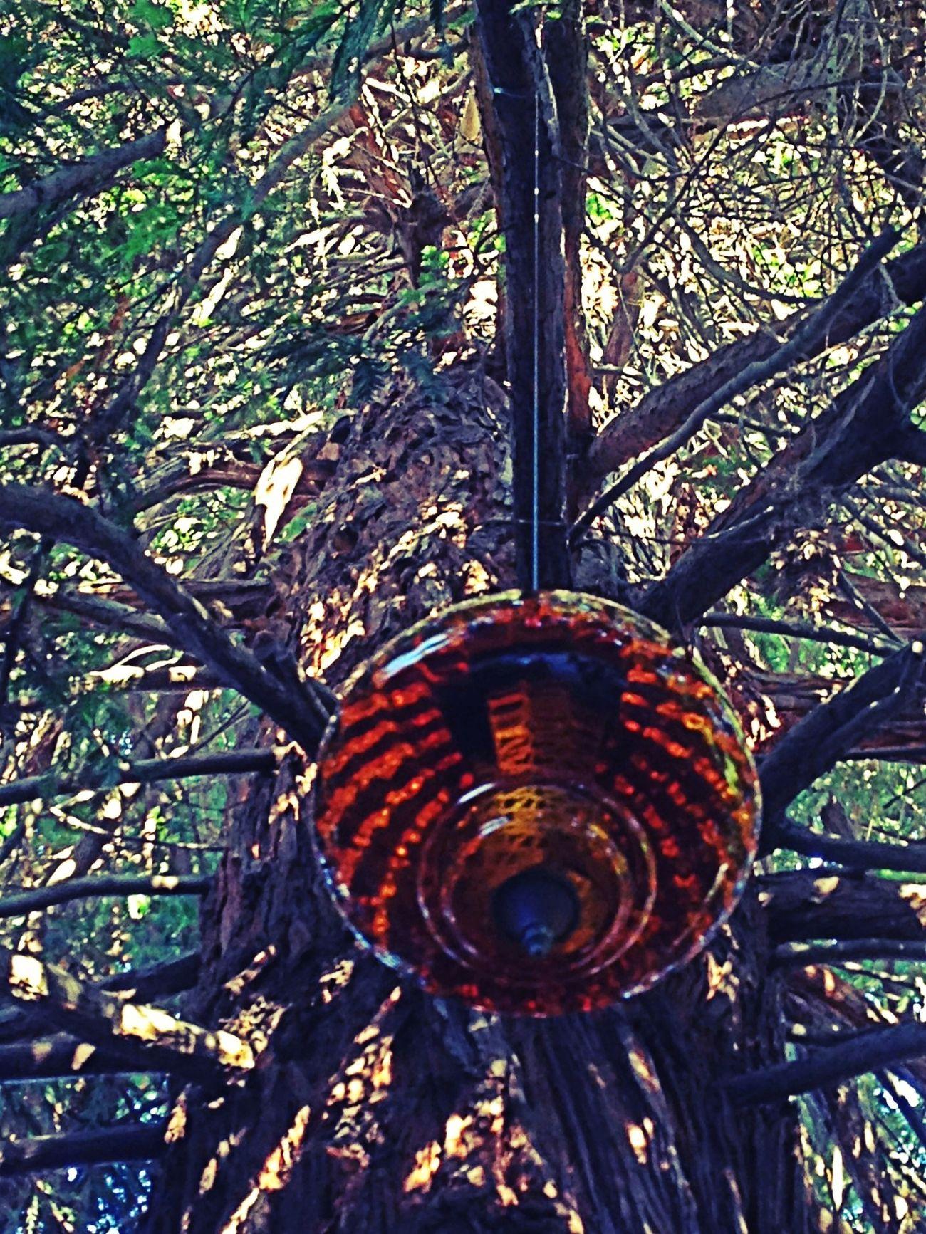 Lookingup Garden Lighting Tree Underneath