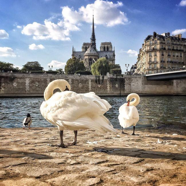 Good Evening Paris! Bonne Soirée Bird Swan Architecture Eyem Best Shot - Architecture Photooftheday Paris ❤ EyeEm Best Shots Paris Cloud - Sky Architecture Parisweloveyou