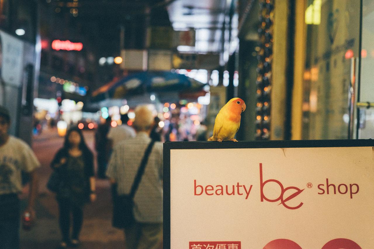 Animal Themes Bird Birds Birds Of EyeEm  City Illuminated Night Outdoors Street Street Life Street Photography Streetphotography Text