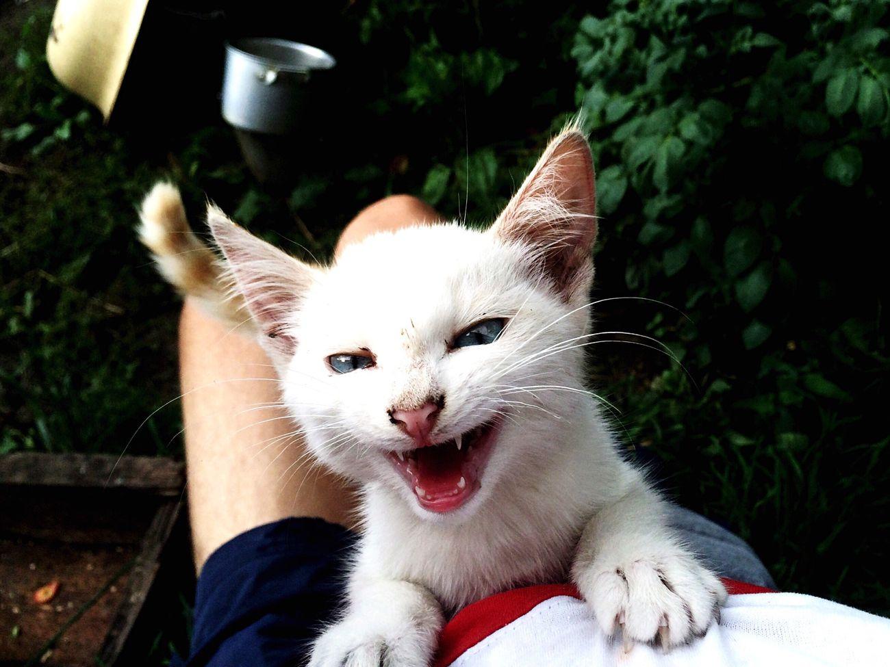 Вот такой вот котёнок выживает один в деревне First Eyeem Photo