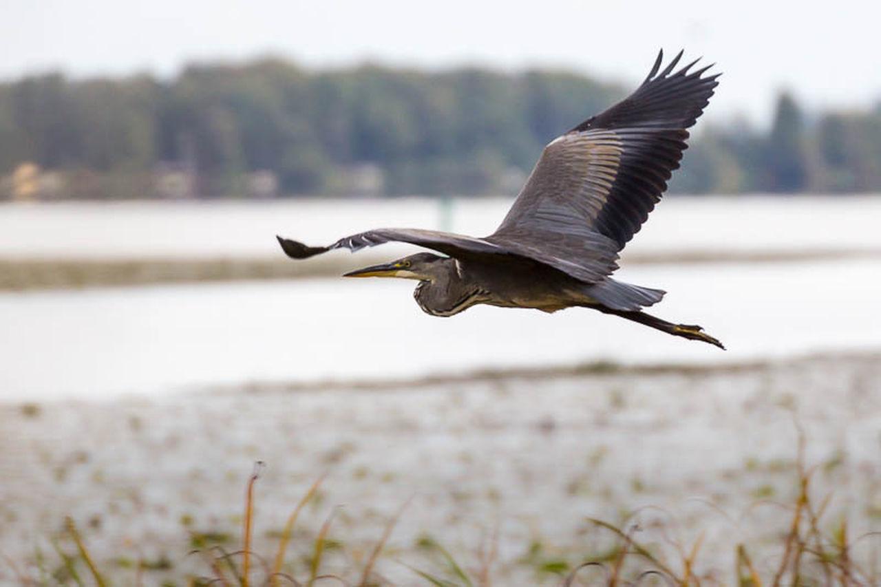 EyeEm Nature Lover Nature Birds Animals