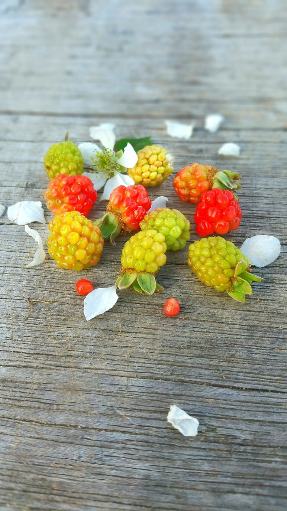 Healthy Eating Fruit Freshness Food Variation Multi Colored Healthy Lifestyle Red Food And Drink No People Close-up Ready-to-eat Outdoors Day Wild Berries Blackberry Dew Berries Weathered Wood Backgrounds Wild Blackberries Unripe Room For Copy Room For Text Wild Flower