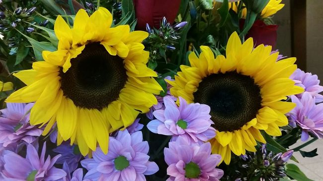 Sunflower Flowers Flowerporn Flowers,Plants & Garden Taking Pictures Leaves Yellow Flower Pink Flower Spring Flowers Flowerlovers