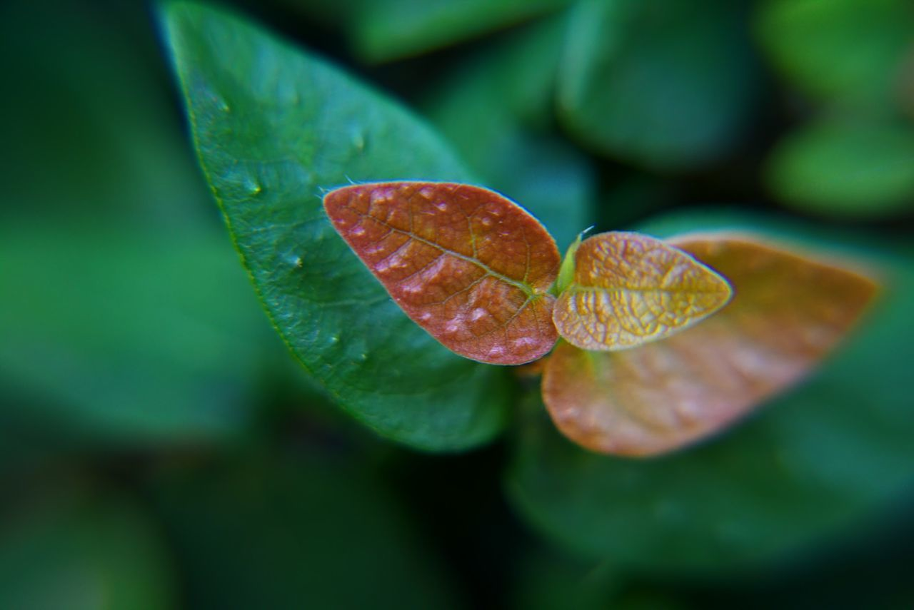leaf, growth, nature, green color, day, close-up, no people, beauty in nature, freshness, fragility, outdoors