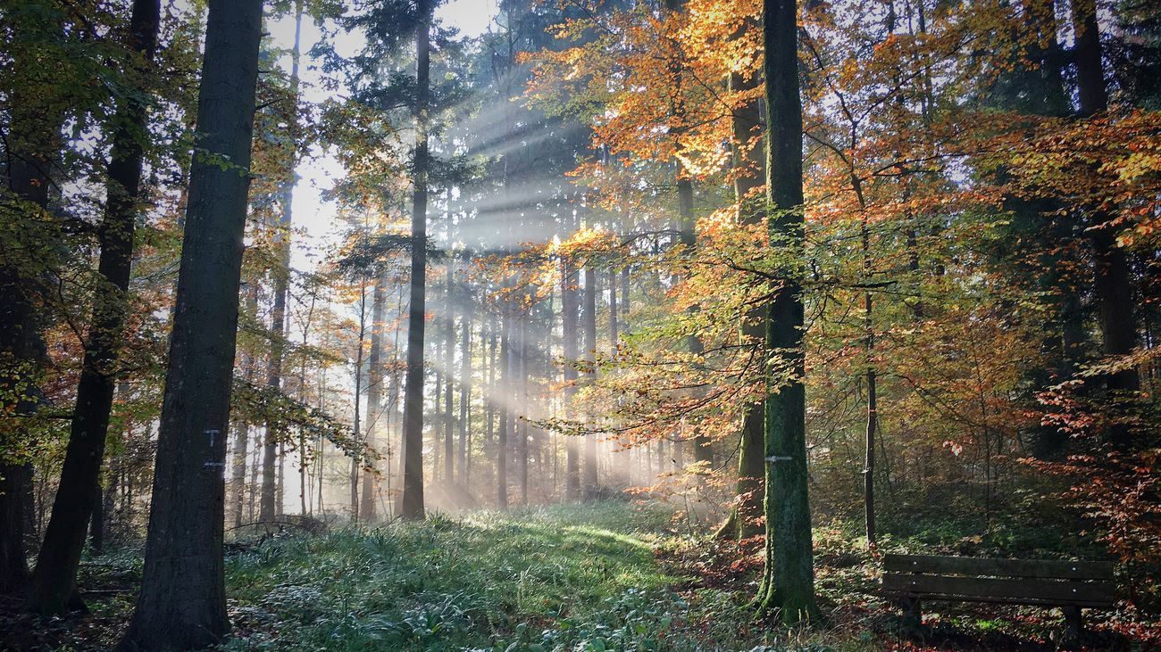 Tree Nature Forest Sunlight WoodLand Autumn Nature Photography Interesting Perspectives