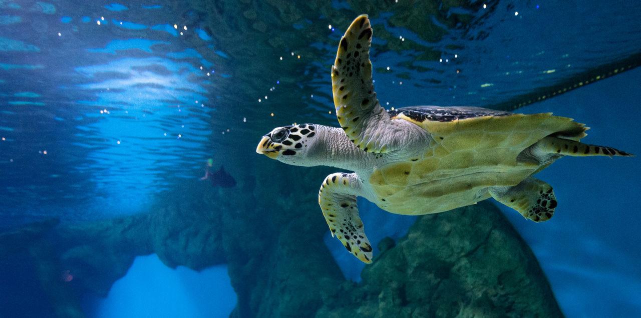 Beautiful stock photos of schildkröte, Animal Shell, Animal Themes, Animal Wildlife, Animals In Captivity