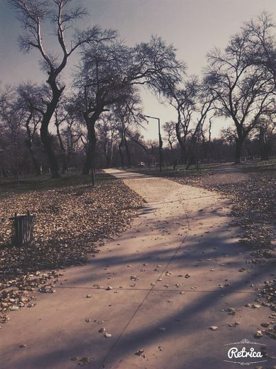 Autumn Colors Sun Beautiful Day My Favorite Place