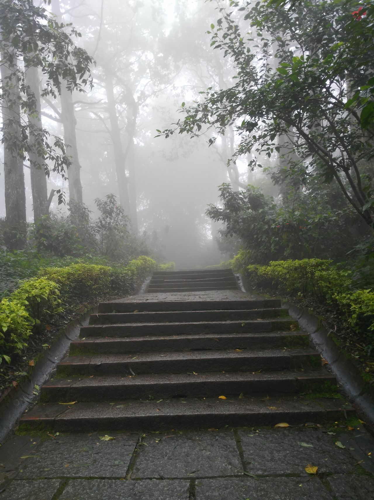 Steps Scenics Foggy Fog Steps And Staircases