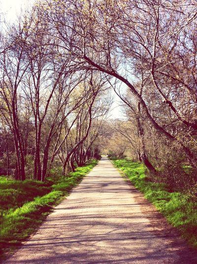 Vanishing Point Spring Promenade The Minimals (less Edit Juxt Photography)