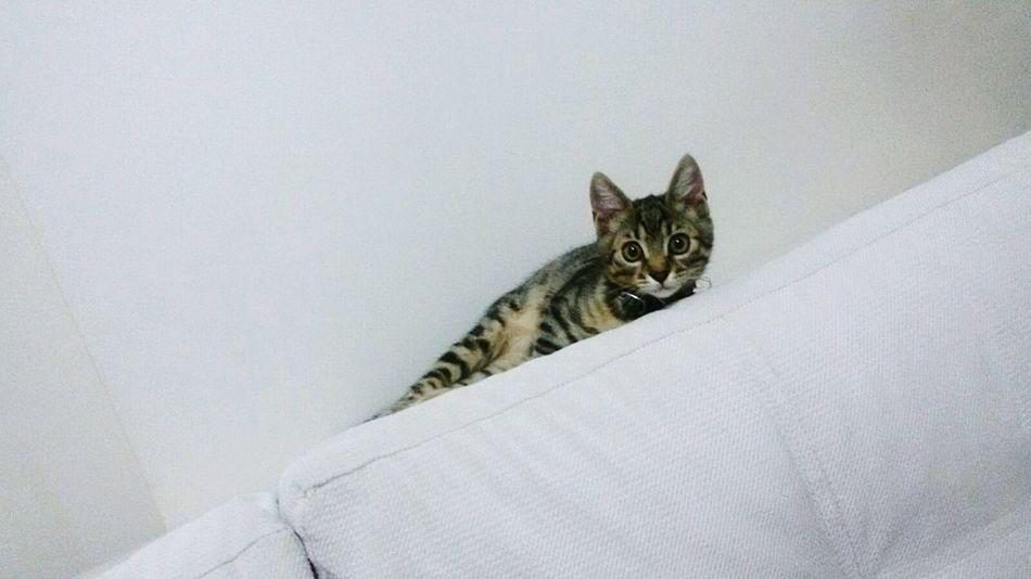 🐱 Cat Kitty Animal Kitten Cute Cute Pets Animal Photography Animallovers Shocked Face Lovely Cat