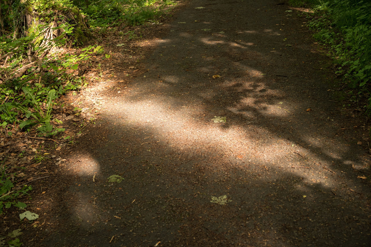 light barrier on the way Diagonal Lines Forest Photography Lights And Shadows No People Outdoors Sunlit Way