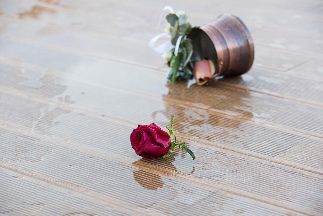 Rose - Flower Roses Rose🌹 Wedding Wedding Ceremony Wedding Day Wedding Party Wedding Photography Wedding Photos Weddingphotographer Weddingphotography Weddings Weddings Around The World