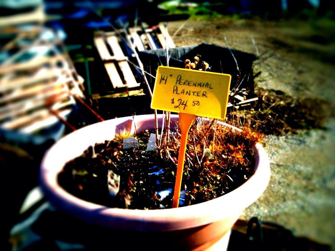 Perennial planter in Toronto Perennial Planter