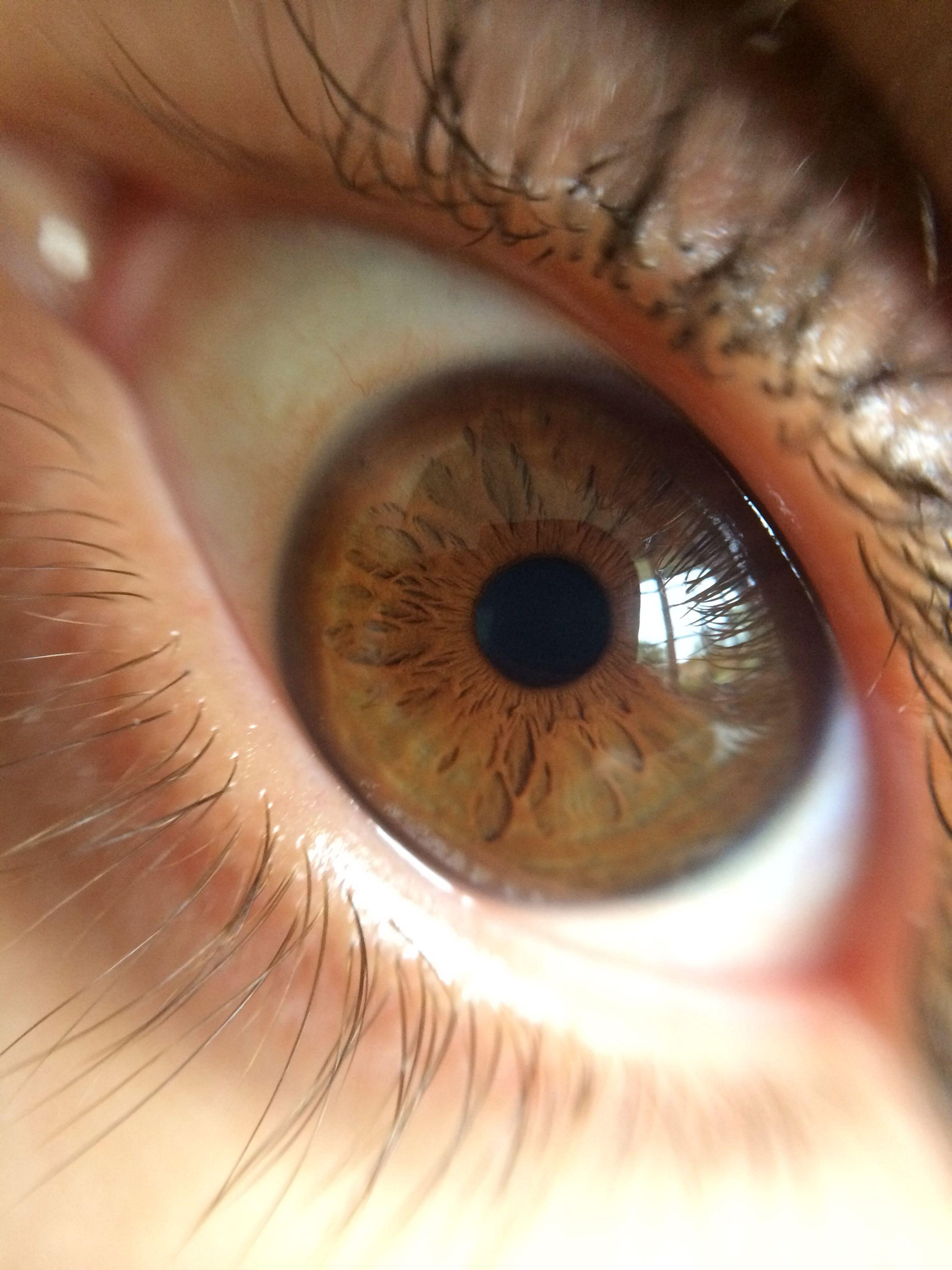 human eye, eyelash, eyesight, close-up, extreme close-up, full frame, sensory perception, iris - eye, extreme close up, eyeball, indoors, backgrounds, part of, macro, looking at camera, detail, human skin