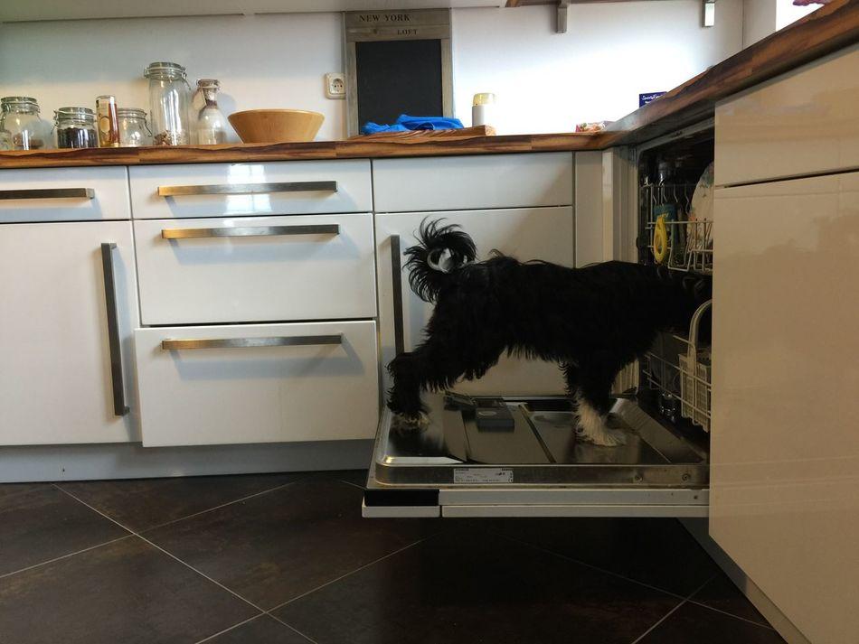 DishwAsher🐶 Ilovemydog Dog Dishwasher Dishwashing Hund Dogs Dog Love Dog❤ Dogslife Dogs Of EyeEm Germany