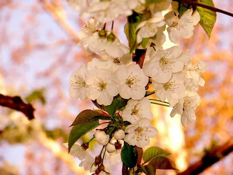 Spring Flowers Flower Spring Flowers Porn