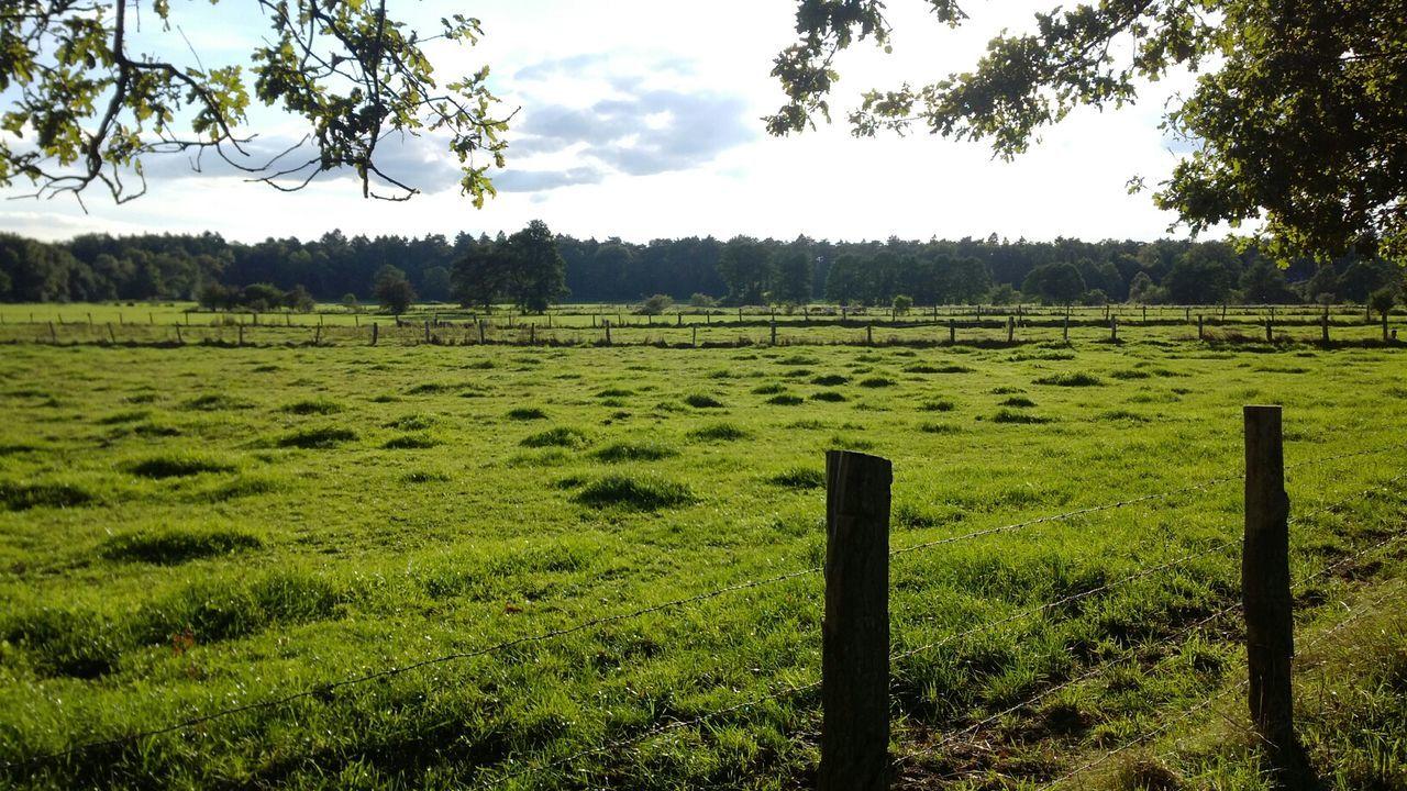 Tranquil Scene Of Grassy Landscape