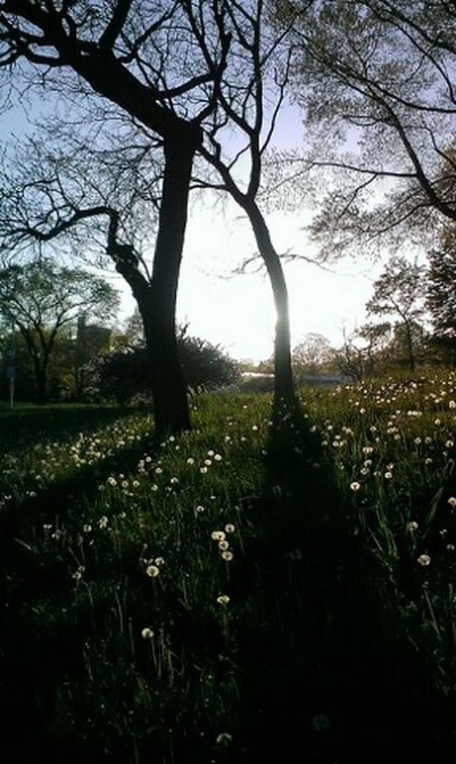 Last Spring, The Dandelion Puffs Kissing The Breeze <3 Traveling Enjoying Life Sightseeing Waiting