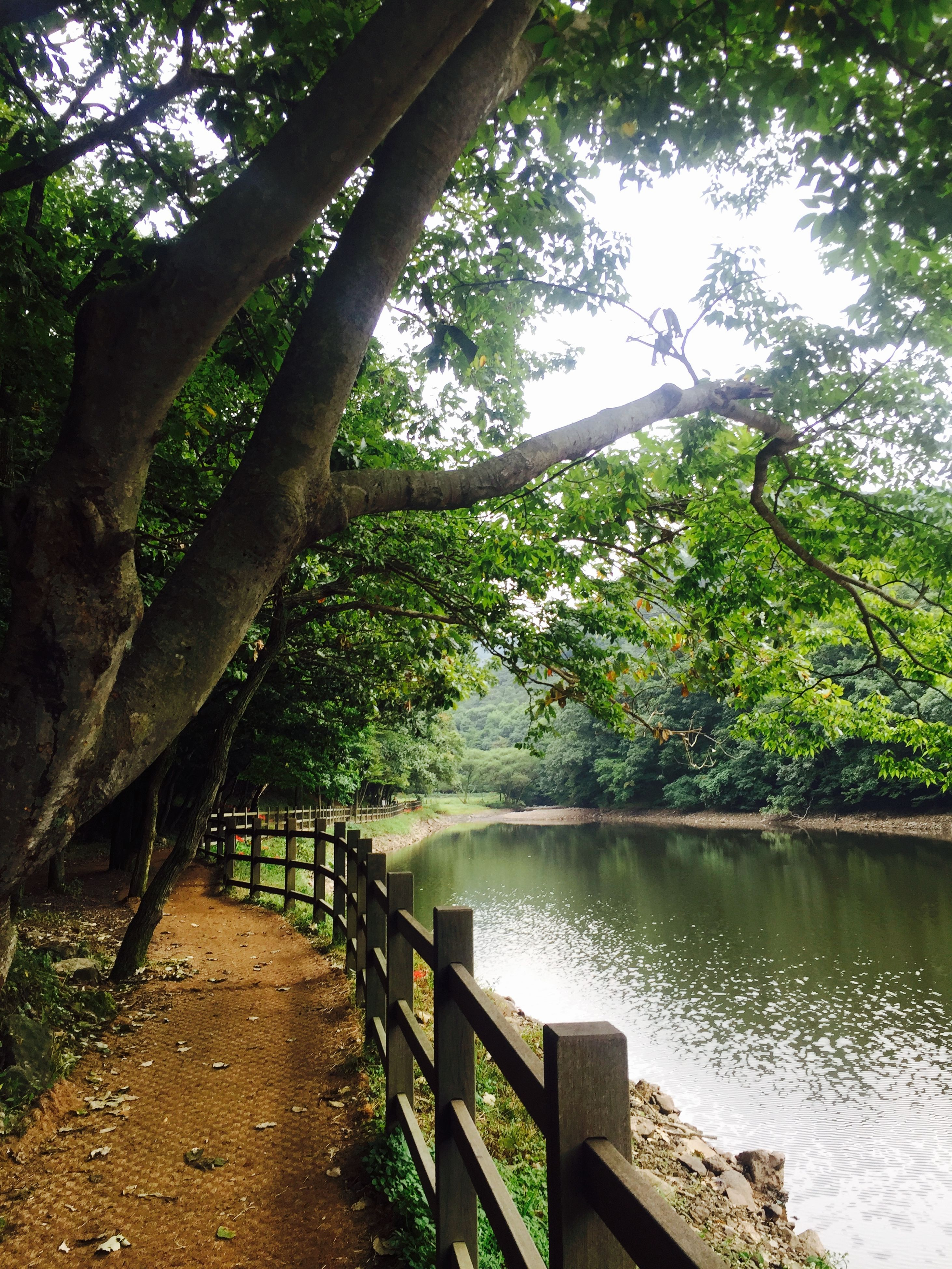 tree, water, tranquility, railing, tranquil scene, lake, nature, beauty in nature, scenics, river, growth, branch, footbridge, forest, wood - material, reflection, day, idyllic, bridge - man made structure, green color