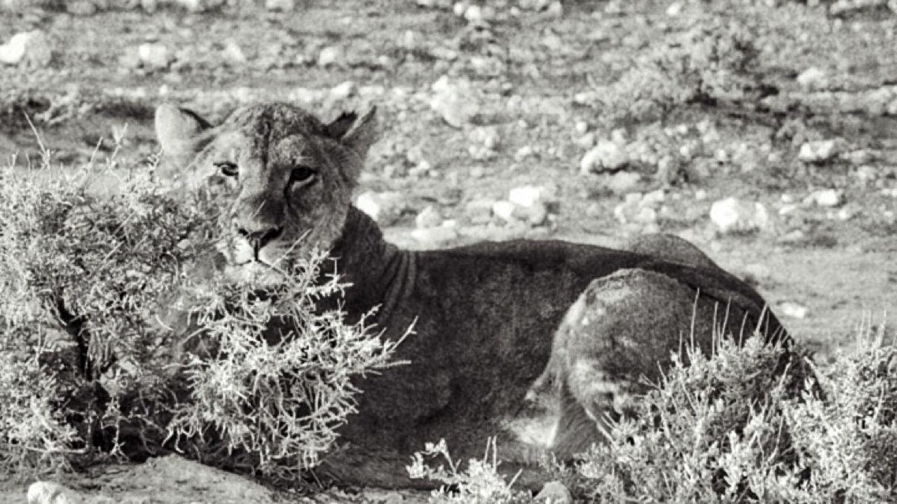 Lionne Etocha Namibia Africa Photographer Traveling Travel Wildlife
