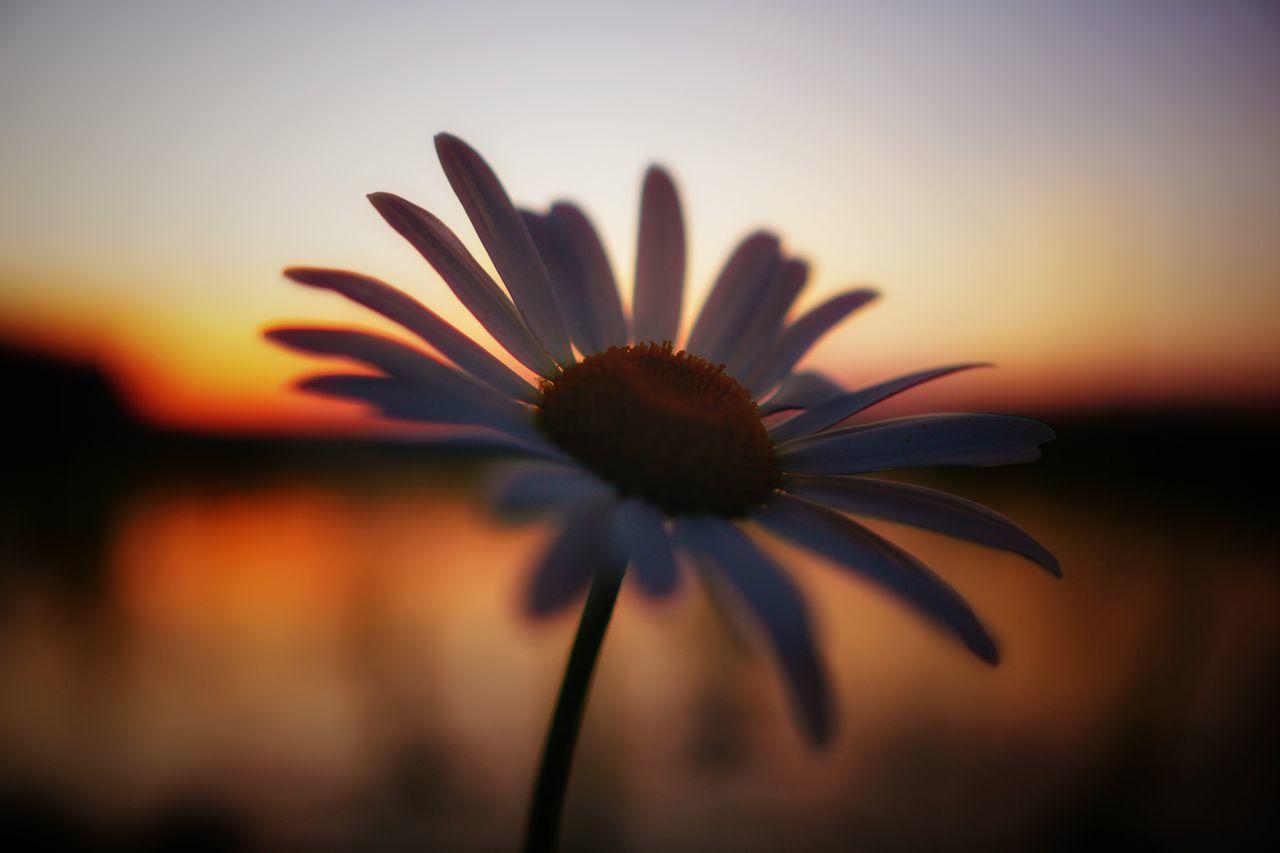 Close-Up Of Orange Flower Against Sky