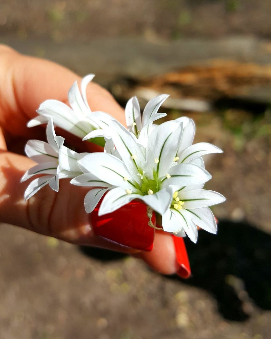 Flower Plant Nature Beauty In Nature Flower Head Close-up Freshness Fragility Focus On Foreground Holding Hold Flower Painted Nails Orange Nails! Fingers Hold Flowers