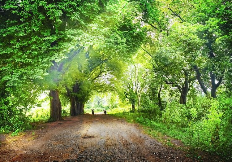 Forest path.roads to the greens.nature. Nature Green Color Outdoors The Way Forward Beauty In Nature Tree Lost In The Landscape Landscape Summer Freshness Beauty In Nature Unique Perspectives Happiness Growth Day No People Tranquility Forest Photography Forest Path
