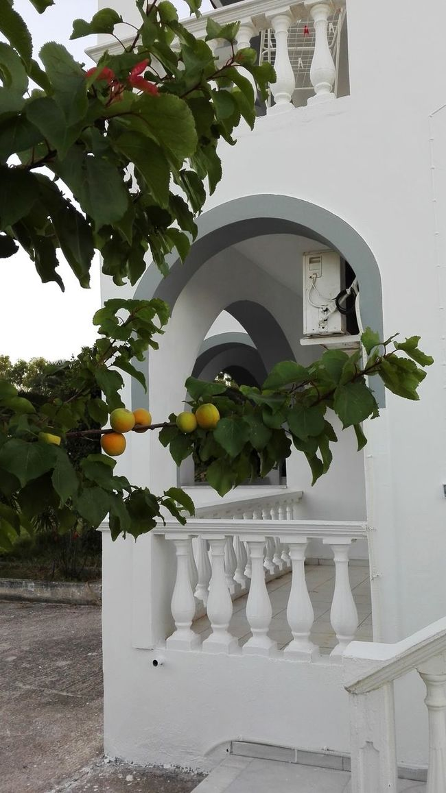 Summer's dream. Architecture Beautiful Beauty In Nature Blossom Botany Building Exterior Day Flower Freshness Greece Green Green Color Growth Ideal Idyllic Idyllic Scenery Leaf Outdoors Plant Summer Summertime White Zakynthos Zakynthos,Greece