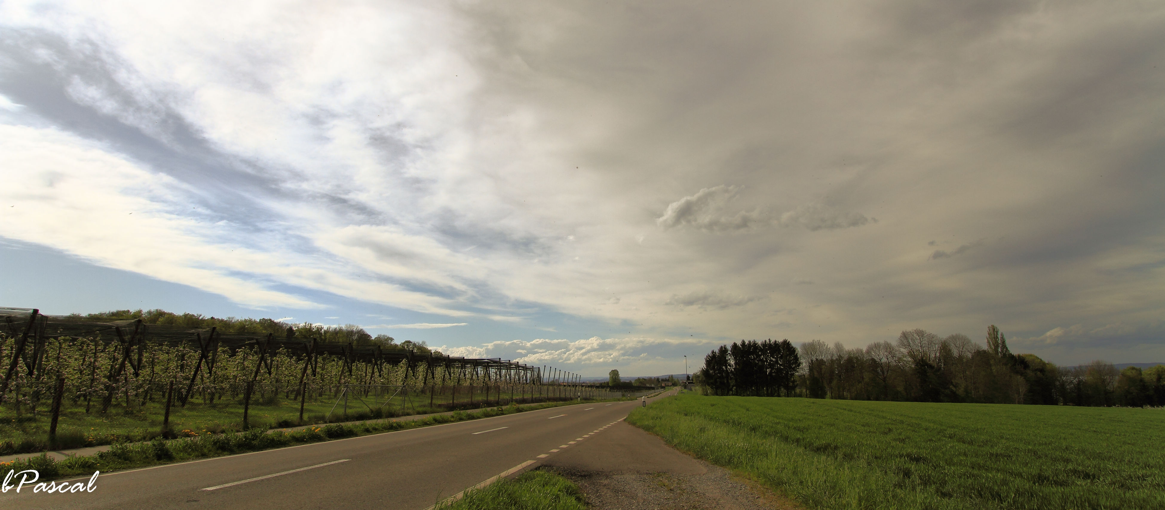 the way forward, road, transportation, sky, diminishing perspective, country road, landscape, vanishing point, tranquility, tranquil scene, cloud - sky, tree, field, nature, empty road, scenics, beauty in nature, grass, cloudy, dirt road
