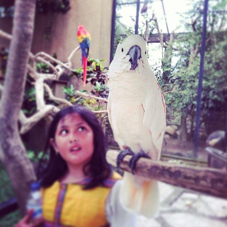 Burung kakaktua di Bali Bird Park INDONESIA Birdpark Baliisland VSCO Vscocam