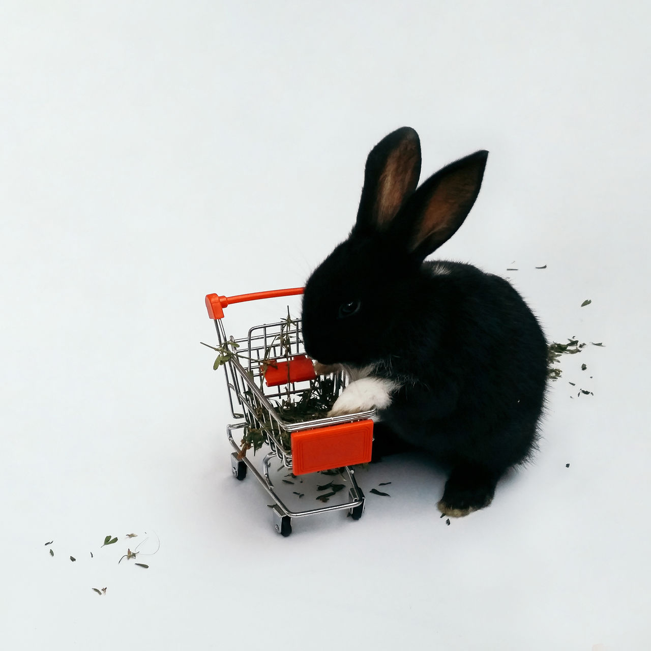 Beautiful stock photos of easter bunny, Animal Themes, Black Color, Copy Space, Domestic Animals