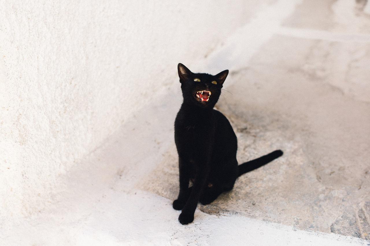 Animal Themes Black Color Cat Day Indoors  Mammal No People One Animal Pets Portrait Santorini Santorini, Greece