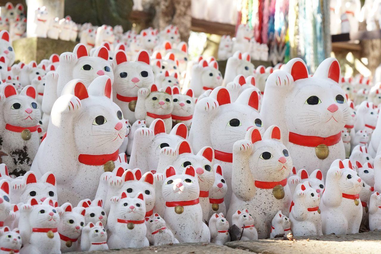 世田谷区 豪徳寺 No People Eyeemgallery Happy 幸運 Culture Cat Japan 招き猫 Eye4photography  EyeEm Gallery