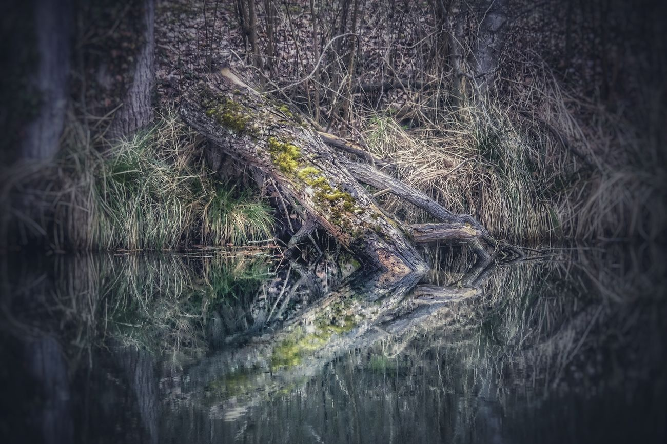 Reflection Reflection_collection Reflections In The Water Tree Nature Forest Tranquility Water Outdoors Tree Trunk Lake No People Scenics Day Woods Beauty In Nature Eye4photography  EyeEm Nature Lover March 2017 Ladyphotographerofthemonth Nature On Your Doorstep Nature_collection Beauty In Nature