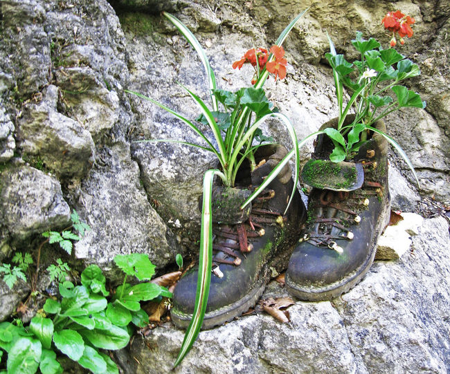 Recycling... Flower Growing Growing Growth Growth Obsolete Old Old Shoes Plant Plant Plants Plants And Flowers Plants Collection Shoe Shoes Weathered