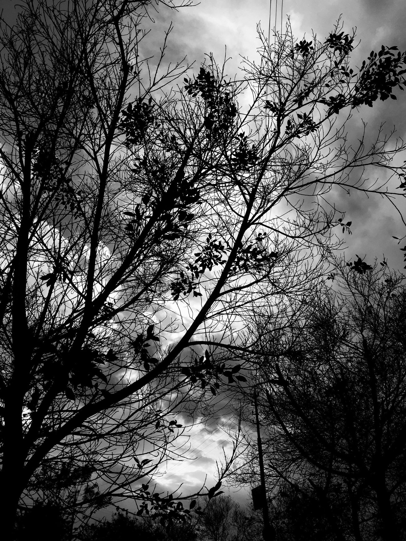 Tree Nature Sky Silhouette Branch Bare Tree Tranquility No People Outdoors Heaven Nature Cloudscape Beauty In Nature Cloud - Sky EyeEm Sky Only Photography Scenics Beauty In Nature Growth Water Low Angle View Day