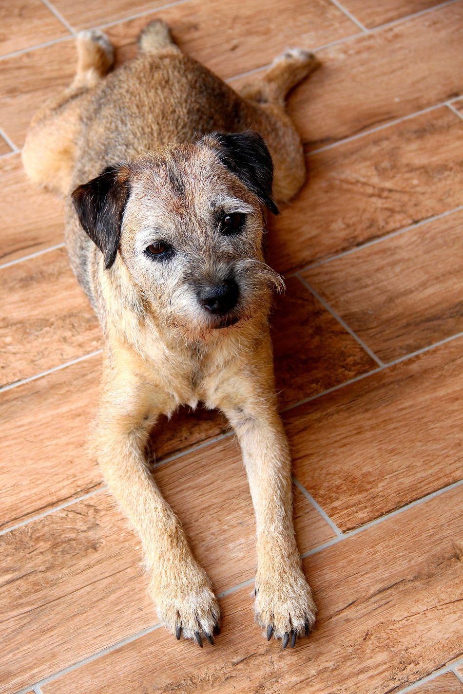 Beautiful stock photos of cute, Animal Themes, Dog, Domestic Animals, Flooring