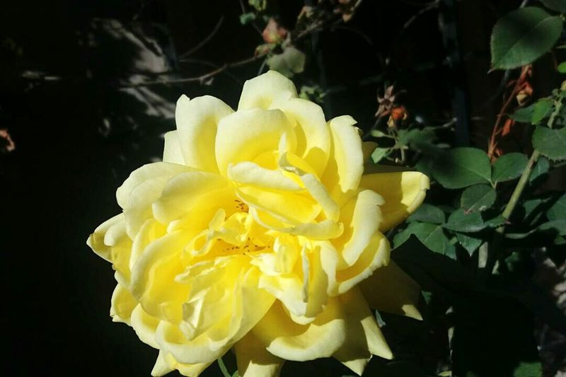 Photography Photooftheday Plant Fleurs Yallow