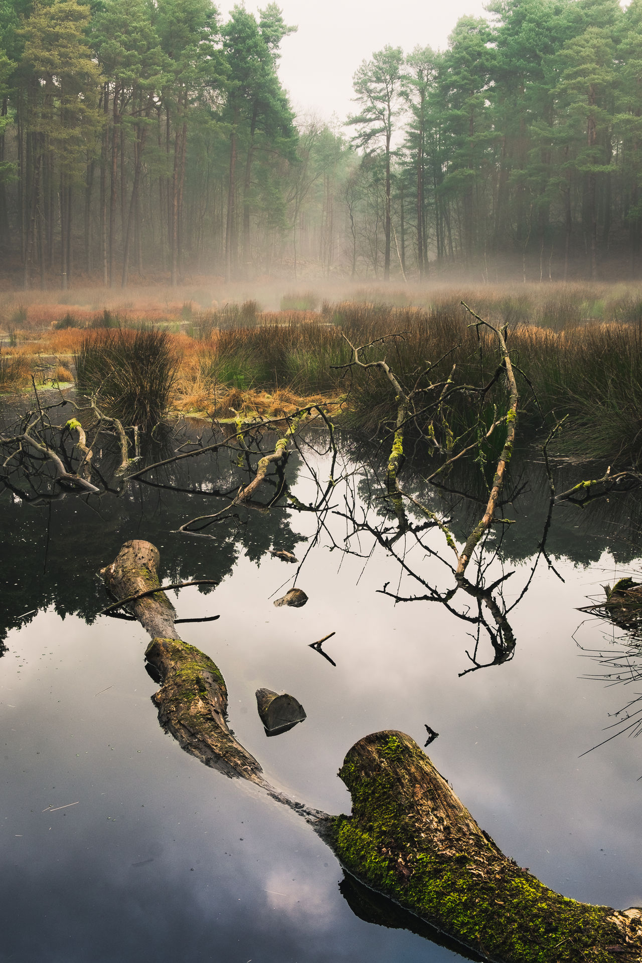 Beauty In Nature Cheshire Day England Forrest Forrest Photography Growth Lake Mist Misty Morning Nature No People Outdoors Plant Reflection Reflection Lake Scenics Sky Tranquility Tree Water Woods